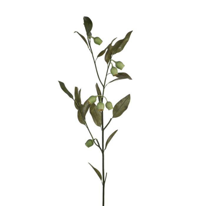 eucalyptus gum nut stem